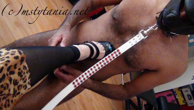 dog-training-foot-12