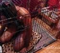 human-dog-cage-feet-7